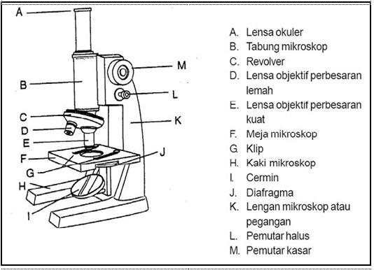Bagian Bagian Mikroskop Fungsinya Dan Gambar Alat Laboratorium